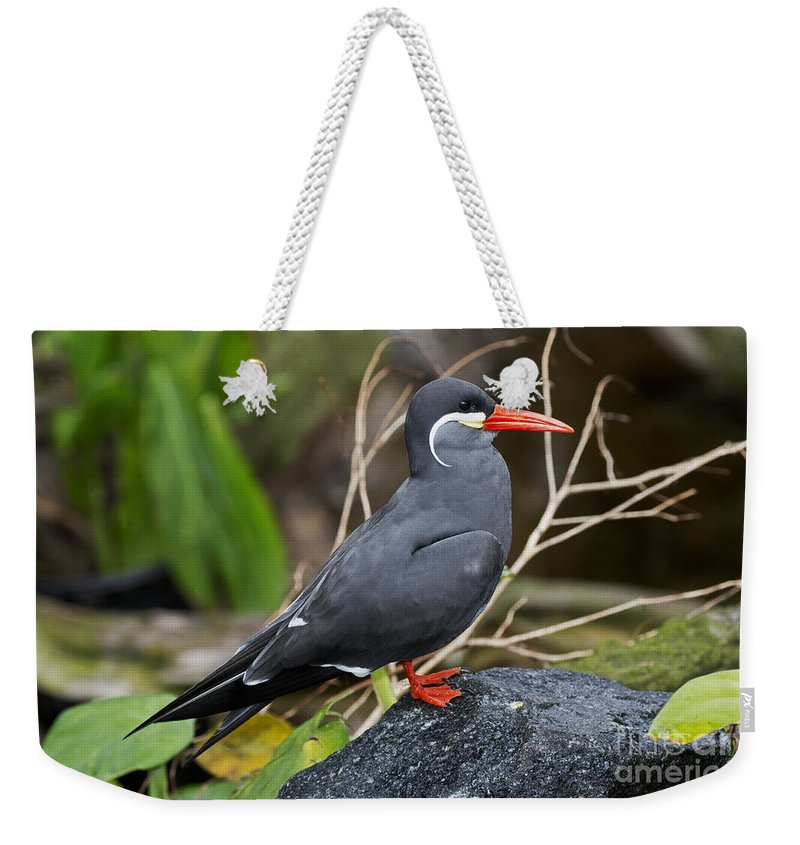 Inca Tern Weekender Tote Bag featuring the photograph Inca Tern by Anthony Mercieca