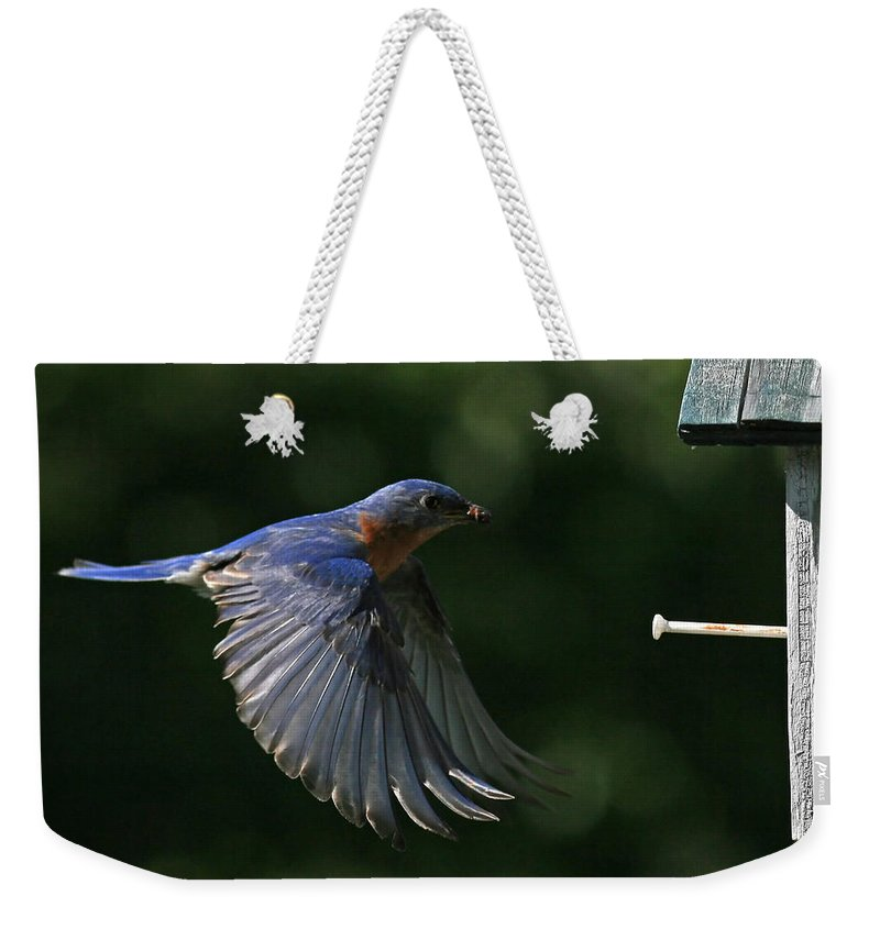Bluebird Weekender Tote Bag featuring the photograph Incoming by Douglas Stucky