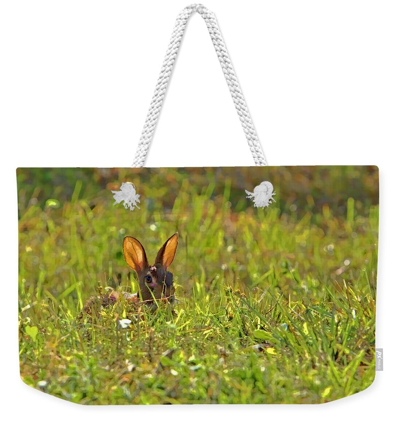Island Weekender Tote Bag featuring the photograph Inconspicuous by Gary Holmes