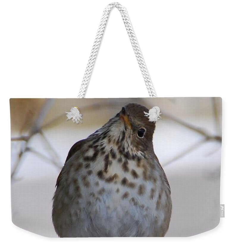 Hermit Thrush Weekender Tote Bag featuring the photograph Inquisitive Hermit Thrush by Cascade Colors