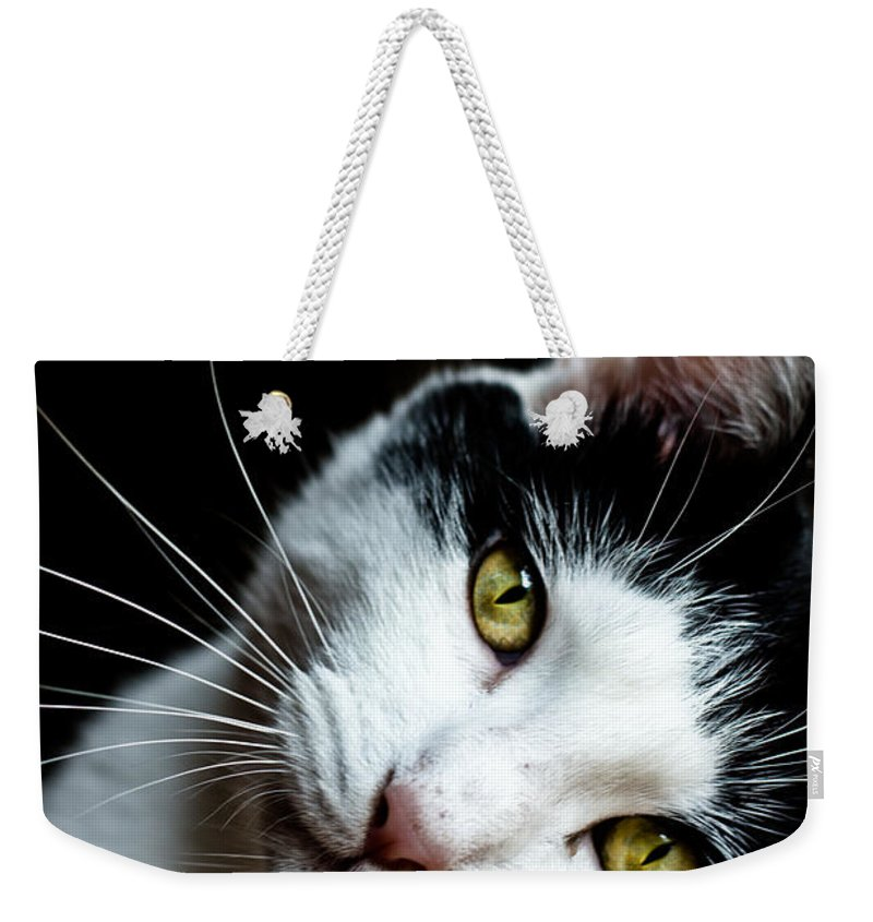 Pet Weekender Tote Bag featuring the photograph Inquisitive Kitty by Cheryl Baxter