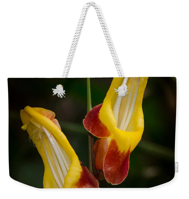 Flower Weekender Tote Bag featuring the photograph Interesting by Nikolai Martusheff