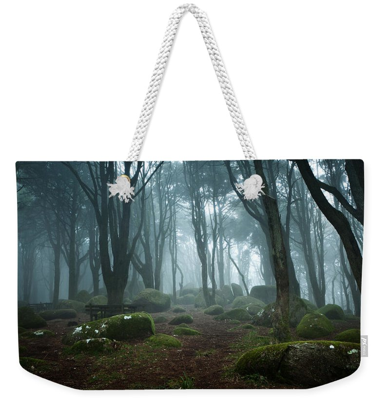 Nature Weekender Tote Bag featuring the photograph Into The Light by Jorge Maia