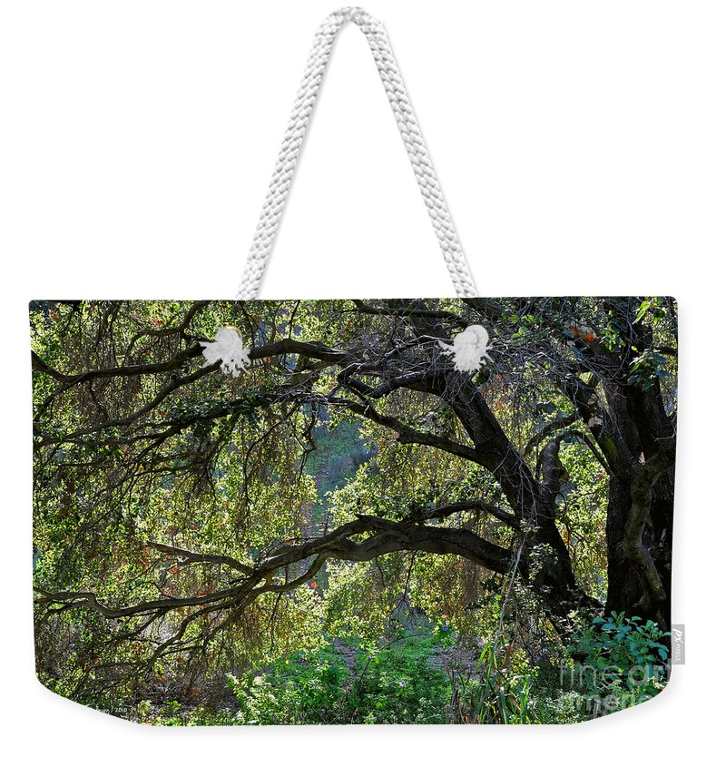 Susan Wiedmann Weekender Tote Bag featuring the photograph Into The Woods by Susan Wiedmann