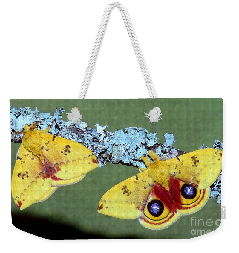 Animal Weekender Tote Bag featuring the photograph Io Moth Automeris Io Adult Males by Millard H. Sharp