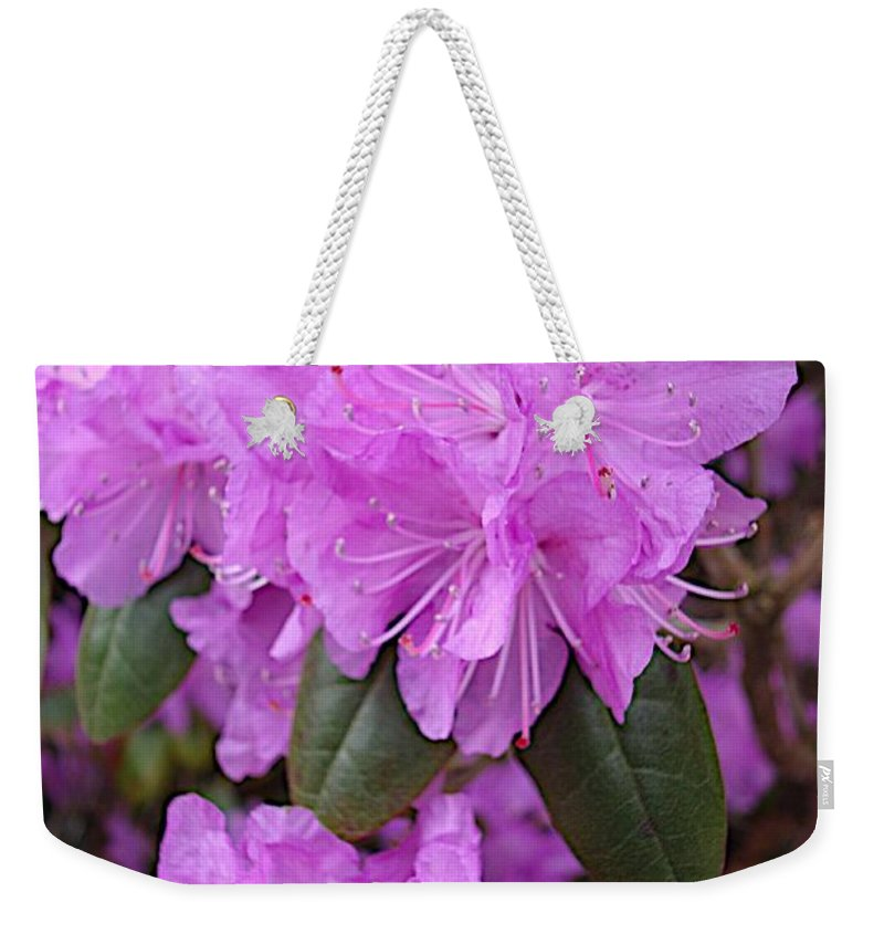 Azaleas Weekender Tote Bag featuring the photograph Iridescent by Joseph Yarbrough