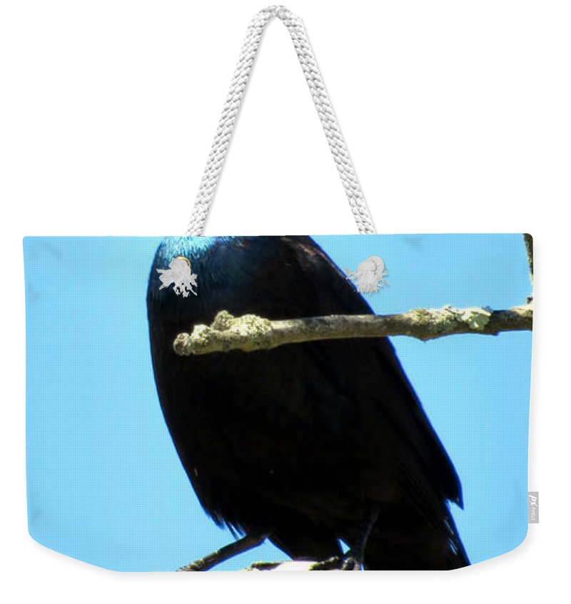 Grackle Weekender Tote Bag featuring the photograph Irridescent by Art Dingo
