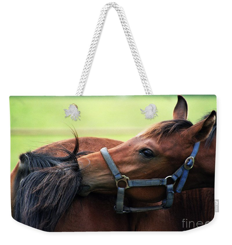 Horse Weekender Tote Bag featuring the photograph Is It My Tail by Angel Ciesniarska