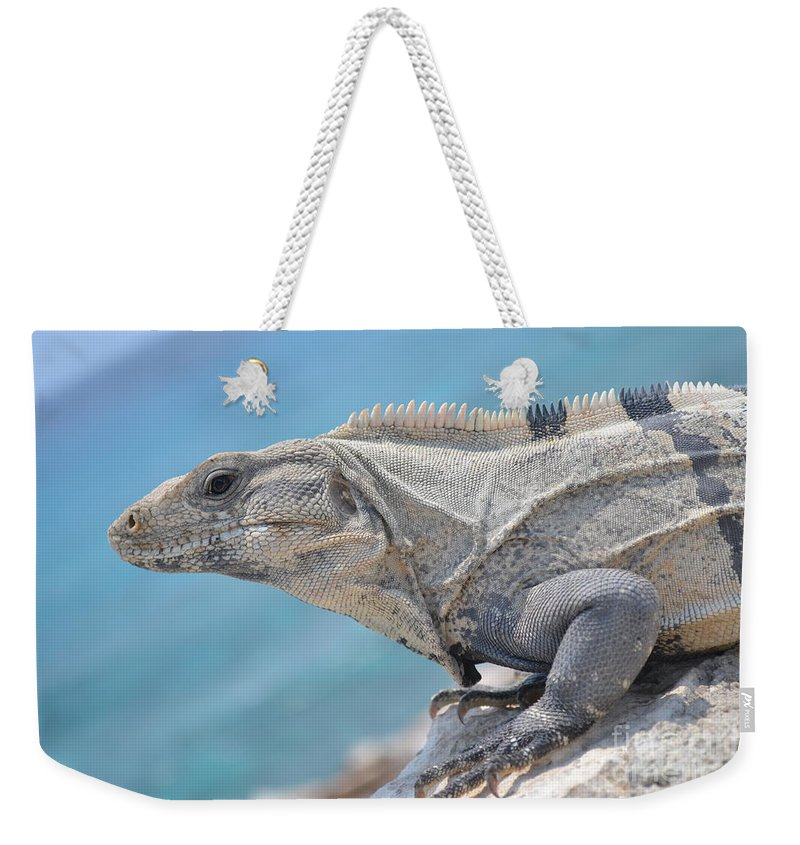 Iguana Weekender Tote Bag featuring the photograph Isla Mujeres Iguana by Stephanie Guinn