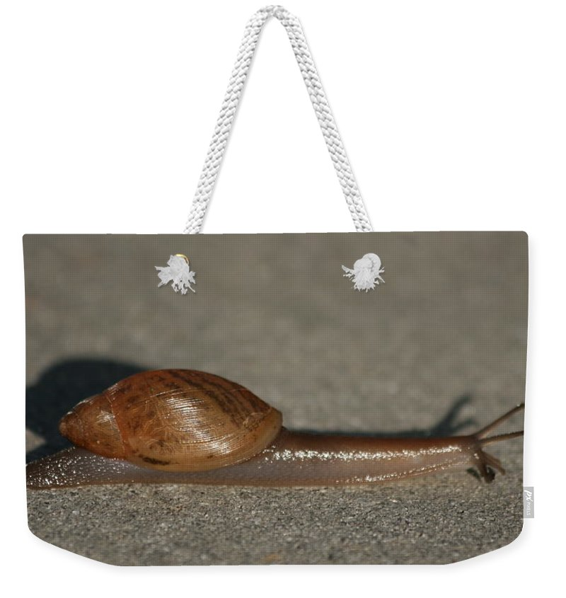 Snail Weekender Tote Bag featuring the photograph It Ain't Heavy by Marty Fancy