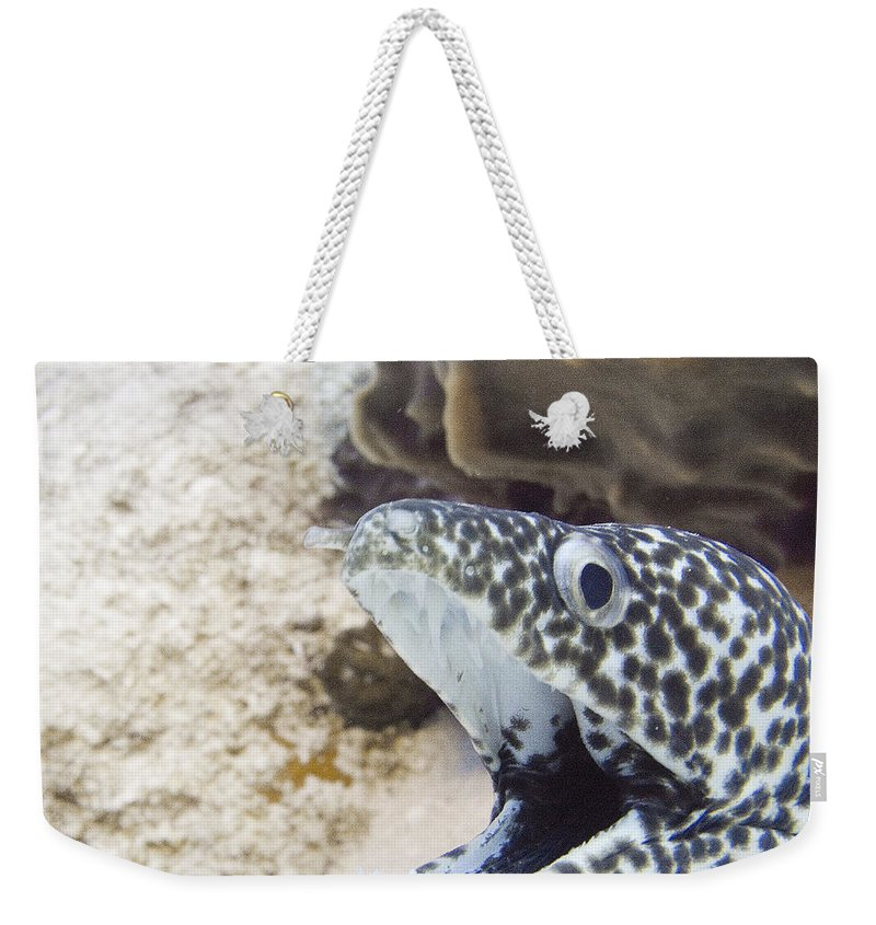Moray Weekender Tote Bag featuring the photograph It's A Moray by Jim Murphy