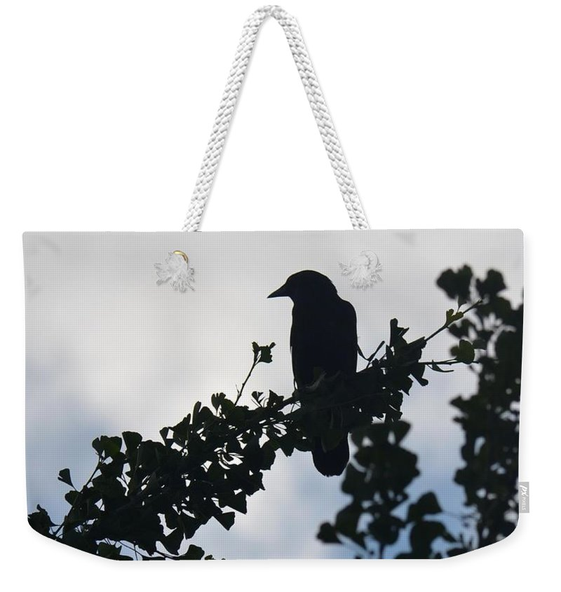 It's Morning Weekender Tote Bag featuring the photograph It's Morning by Maria Urso