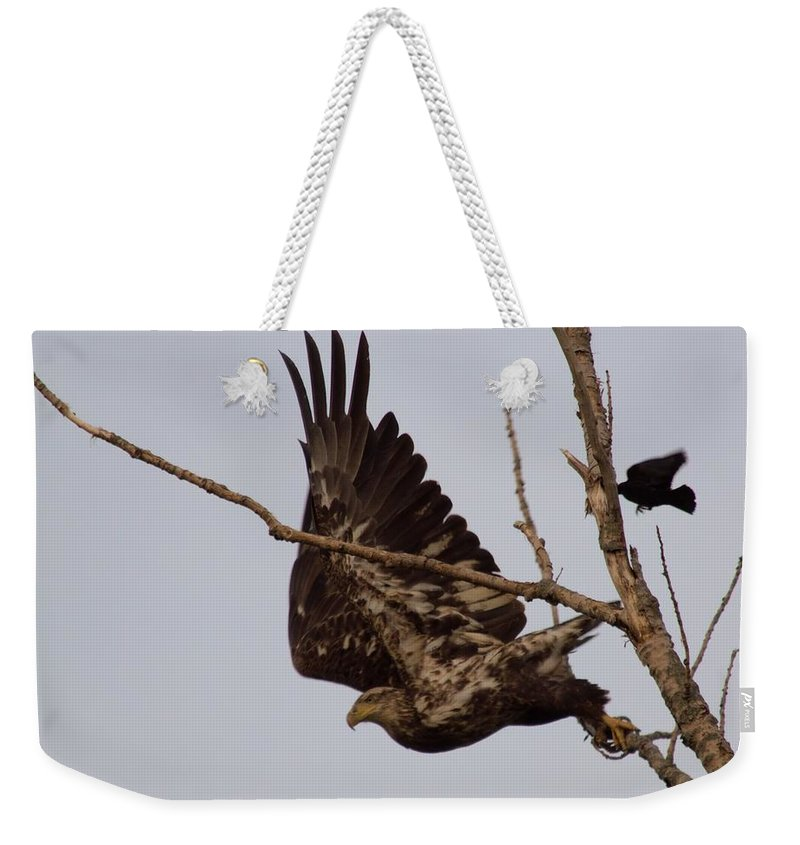 Birds Weekender Tote Bag featuring the photograph I've Had Enough by Bonfire Photography