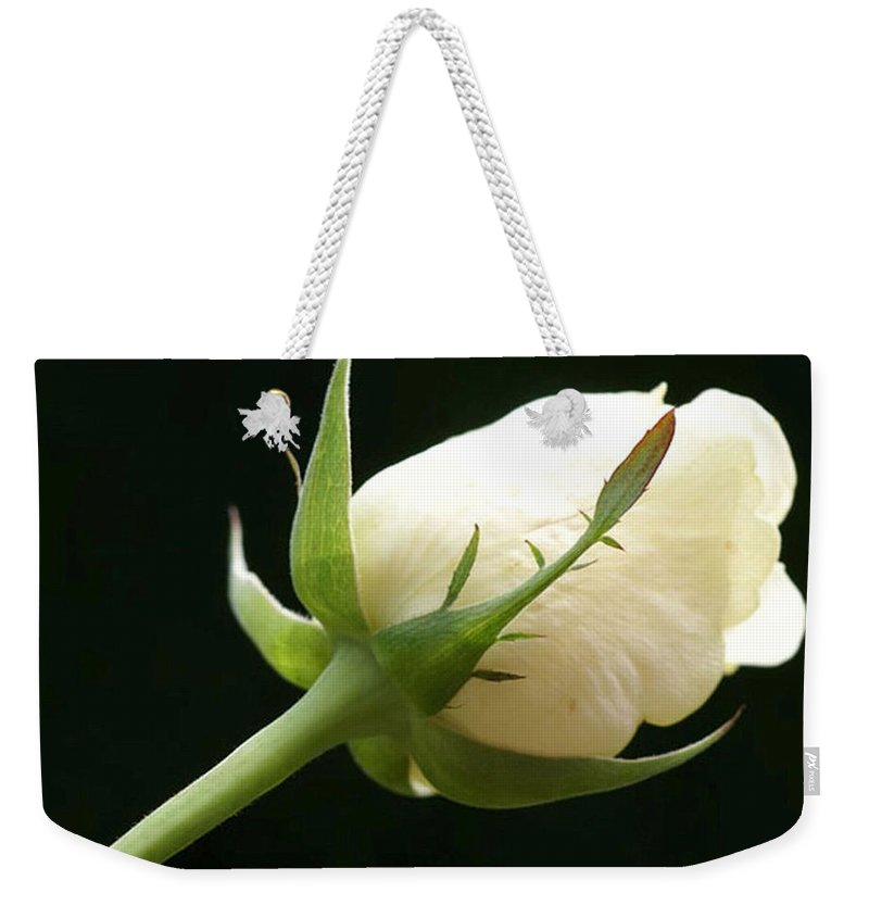 Ivory Weekender Tote Bag featuring the photograph Ivory Rose Bud by Carol Lynch