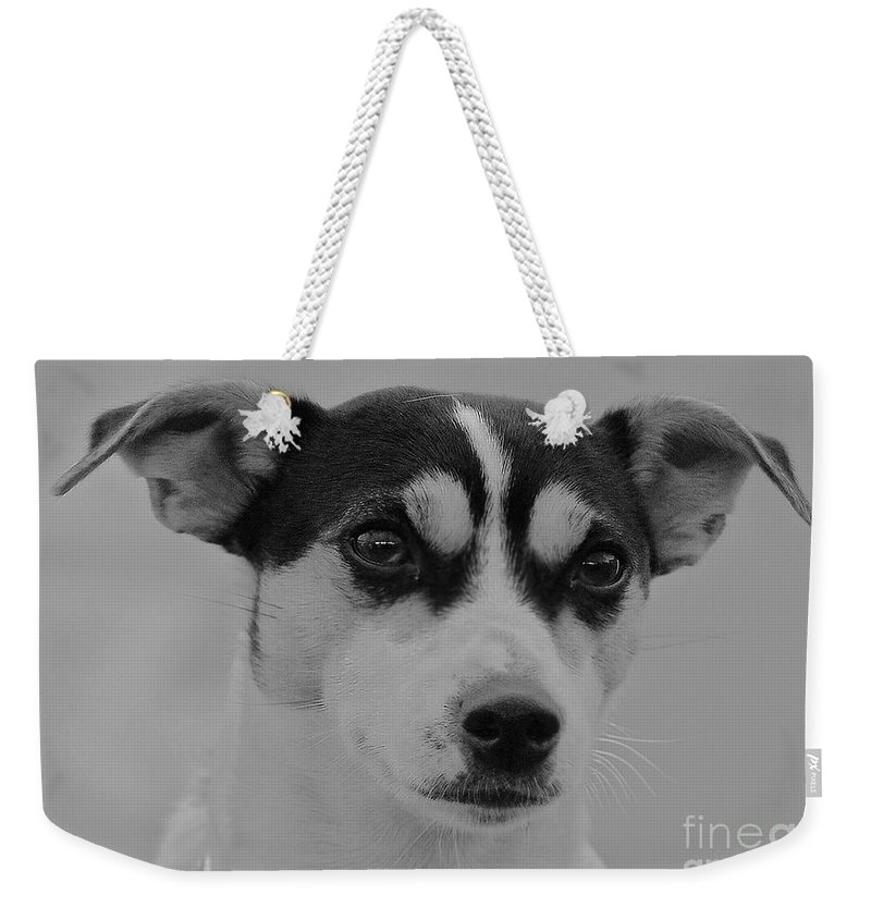 Jack Weekender Tote Bag featuring the photograph Jack Russell by Rob Hawkins