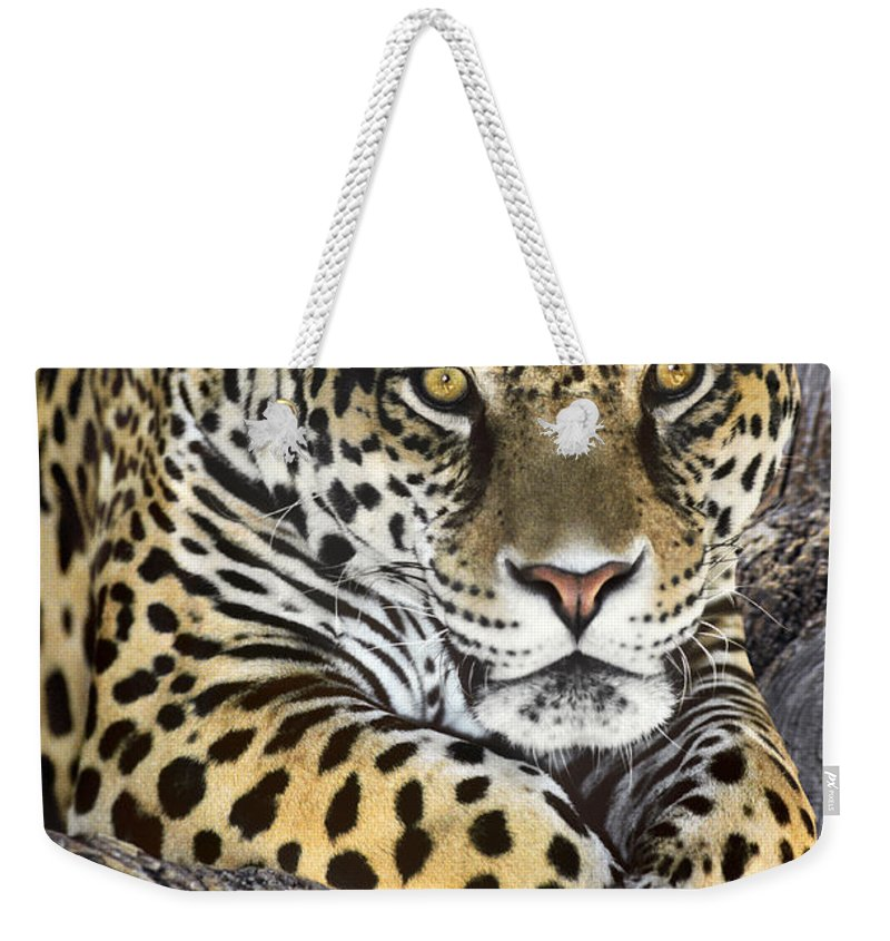 Jaguar Weekender Tote Bag featuring the photograph Jaguar Portrait Wildlife Rescue by Dave Welling