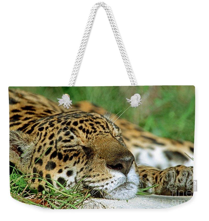 Animal Weekender Tote Bag featuring the photograph Jaguar Resting by Millard H. Sharp