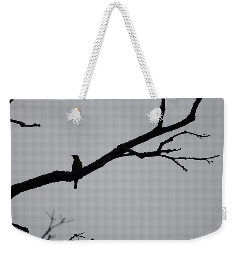 First Star Art Weekender Tote Bag featuring the photograph Jammer Bird Silhouette 1 by First Star Art