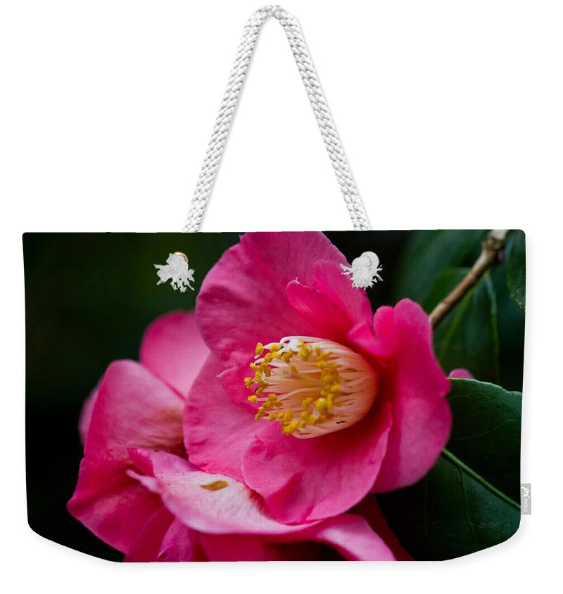 Camellia Weekender Tote Bag featuring the photograph Japanese Camellia-the Official State Flower Of Alabama by Eti Reid