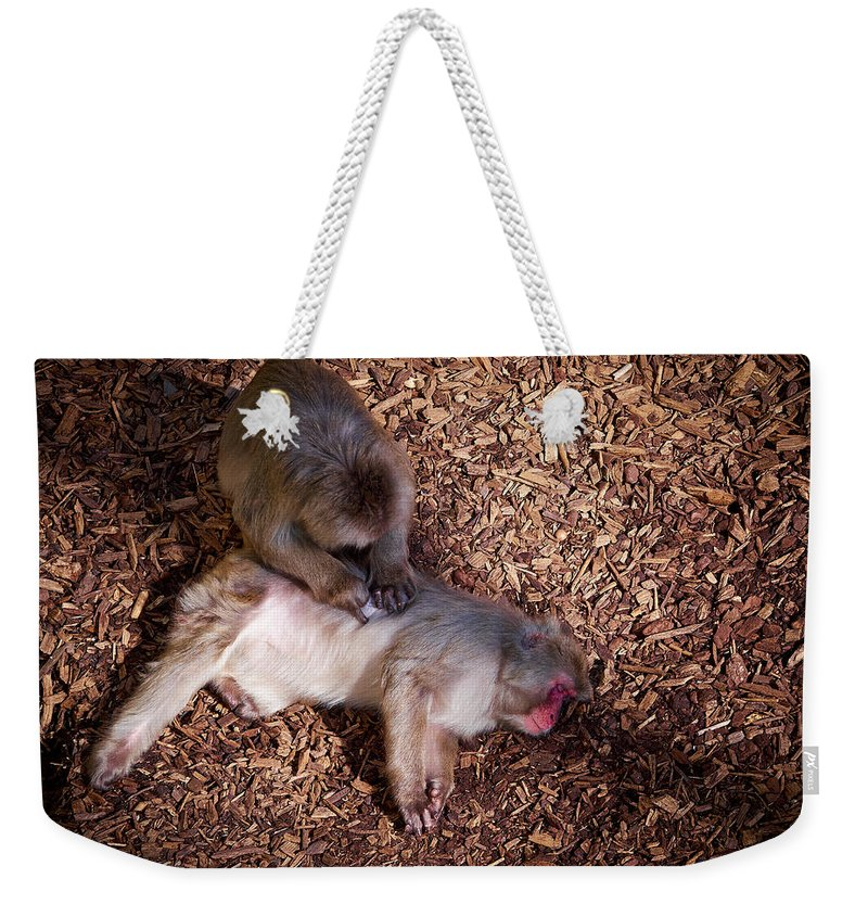 2013. Weekender Tote Bag featuring the photograph Japanese Macaque by Jouko Lehto