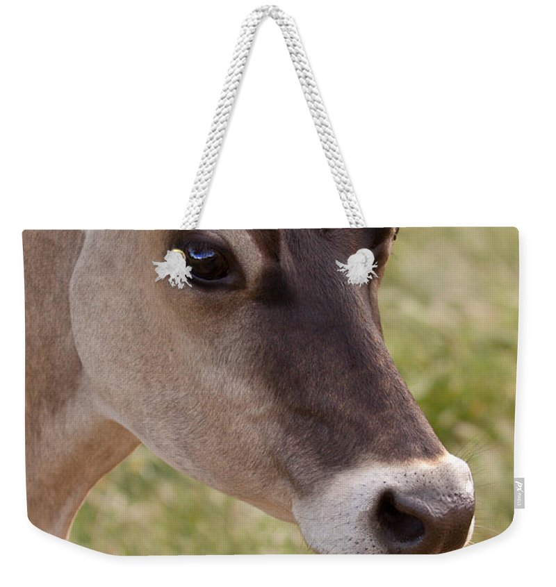 Jersey Weekender Tote Bag featuring the photograph Jersey Cow Portrait by Michelle Wrighton
