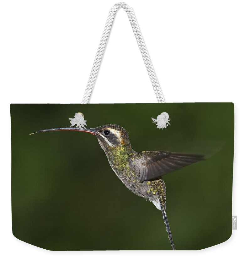 Festblues Weekender Tote Bag featuring the photograph Jewel On Wings.. by Nina Stavlund