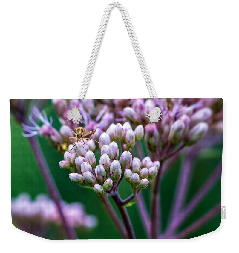 Bolton Weekender Tote Bag featuring the photograph Joe Pye Weed And Bug by Steve Harrington