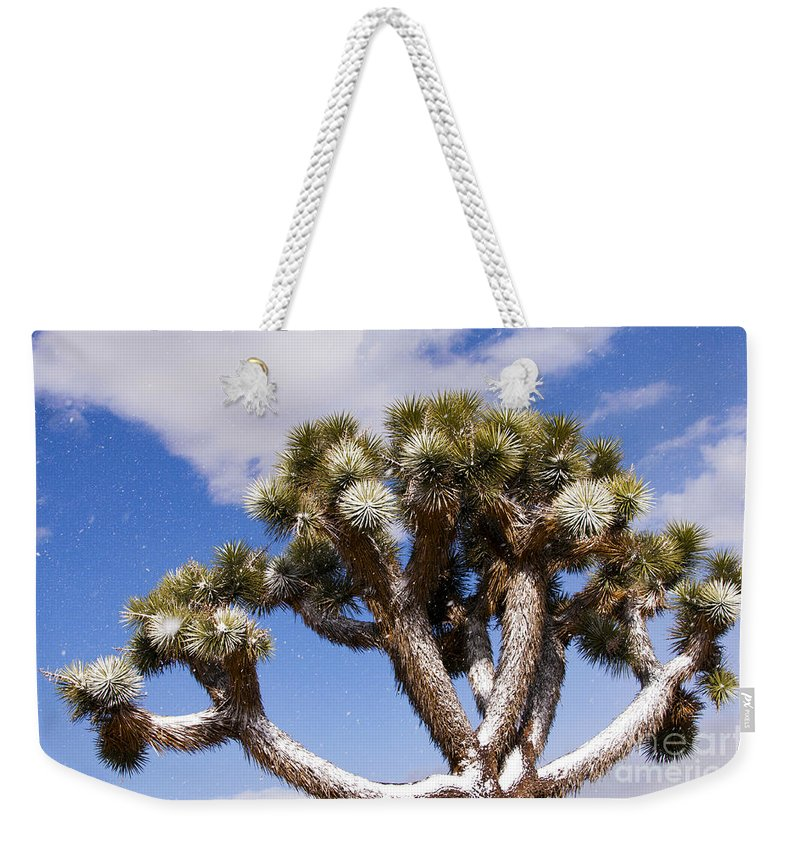 Black Rock Canyon Joshua Tree National Park California Parks Snow Dusted Trees Weekender Tote Bag featuring the photograph Joshua Tree In Snow by Bob Phillips