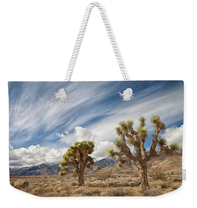 Scenics Weekender Tote Bag featuring the photograph Joshua Trees In Desert by Alice Cahill