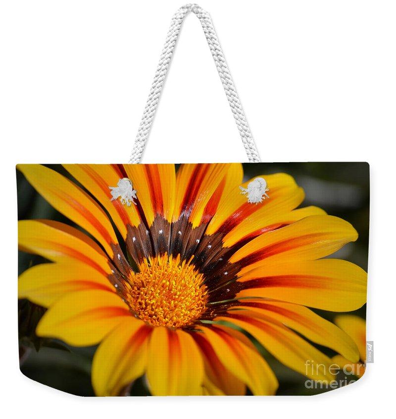 Daisy Weekender Tote Bag featuring the photograph Jubilant Daisy by Deb Halloran