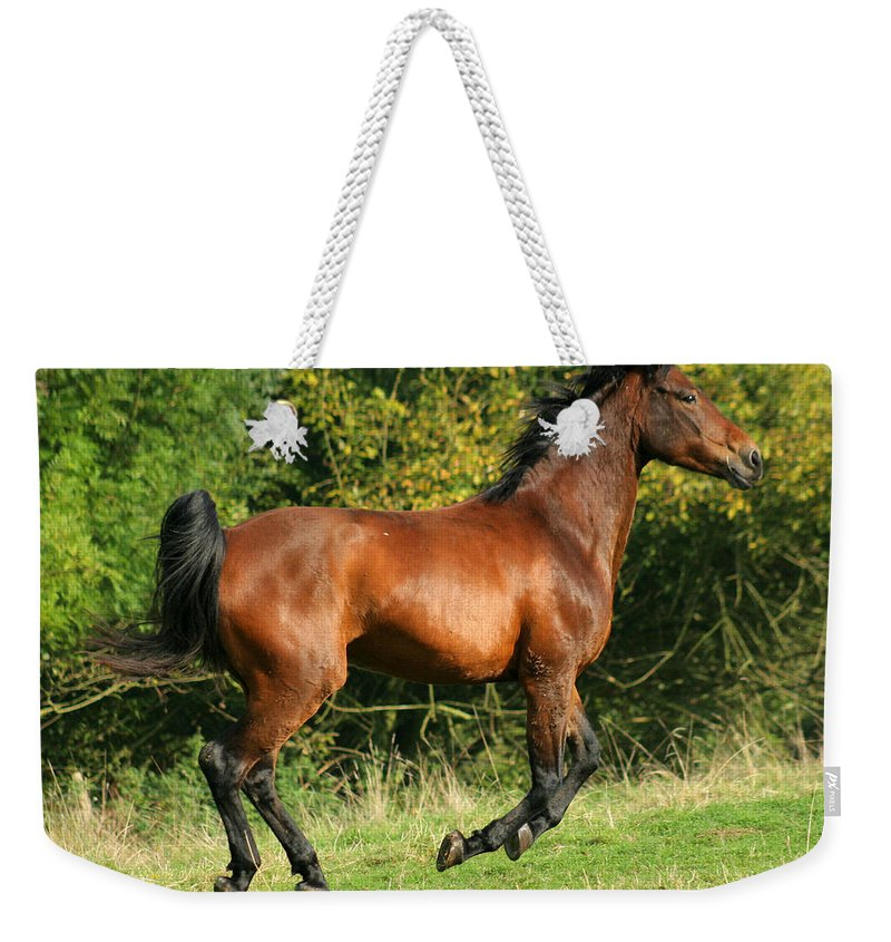 Horse Weekender Tote Bag featuring the photograph Jump Jump Jump by Angel Ciesniarska