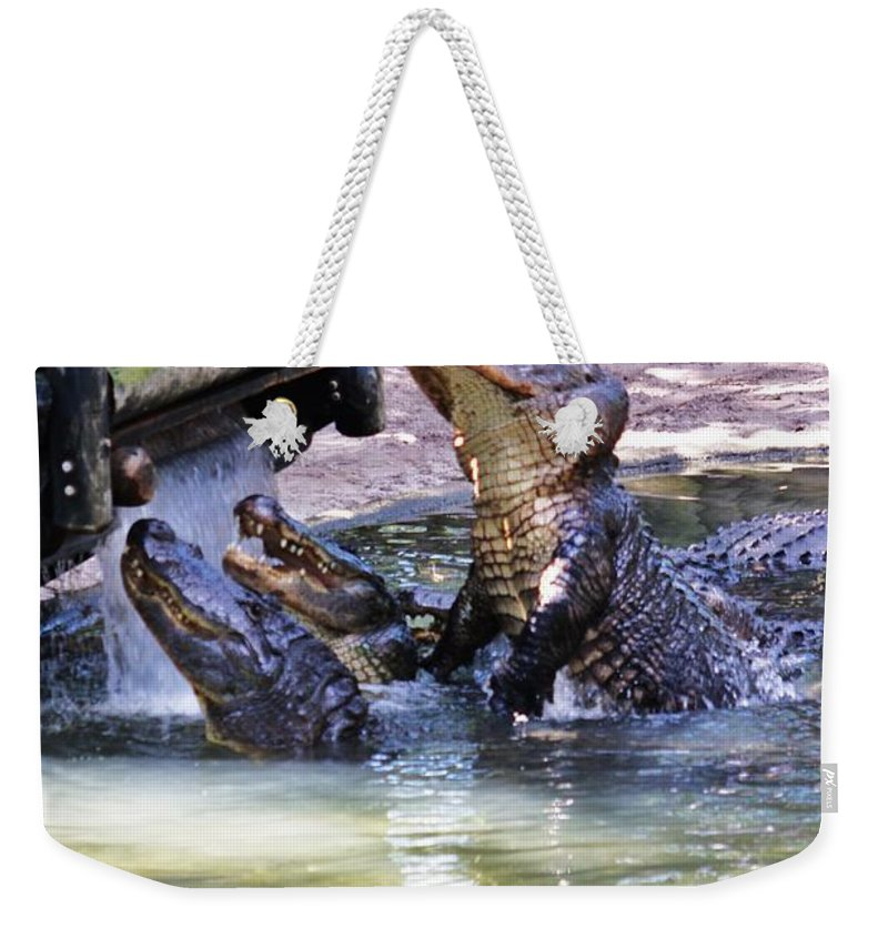 Feeding Weekender Tote Bag featuring the photograph Jumping Gators by Chuck Hicks