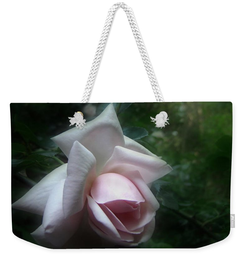 Rose Weekender Tote Bag featuring the photograph June Rose by Louise Kumpf