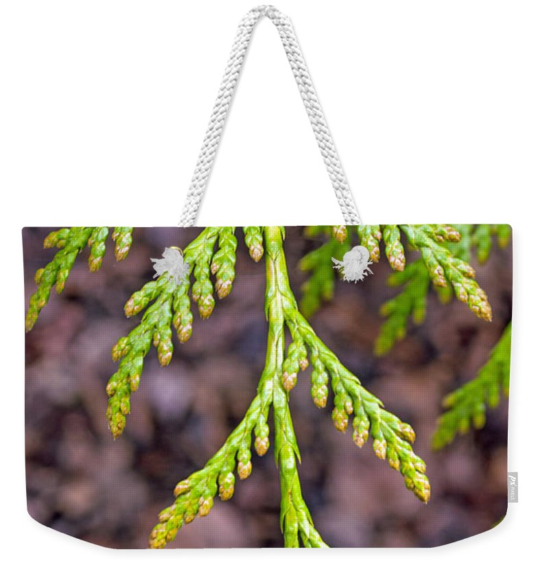 Nature Weekender Tote Bag featuring the photograph Juniper Leaf by Tikvah's Hope