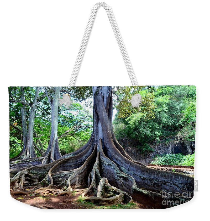 Jurassic Trees Weekender Tote Bag featuring the photograph Jurassic Trees by Mary Deal