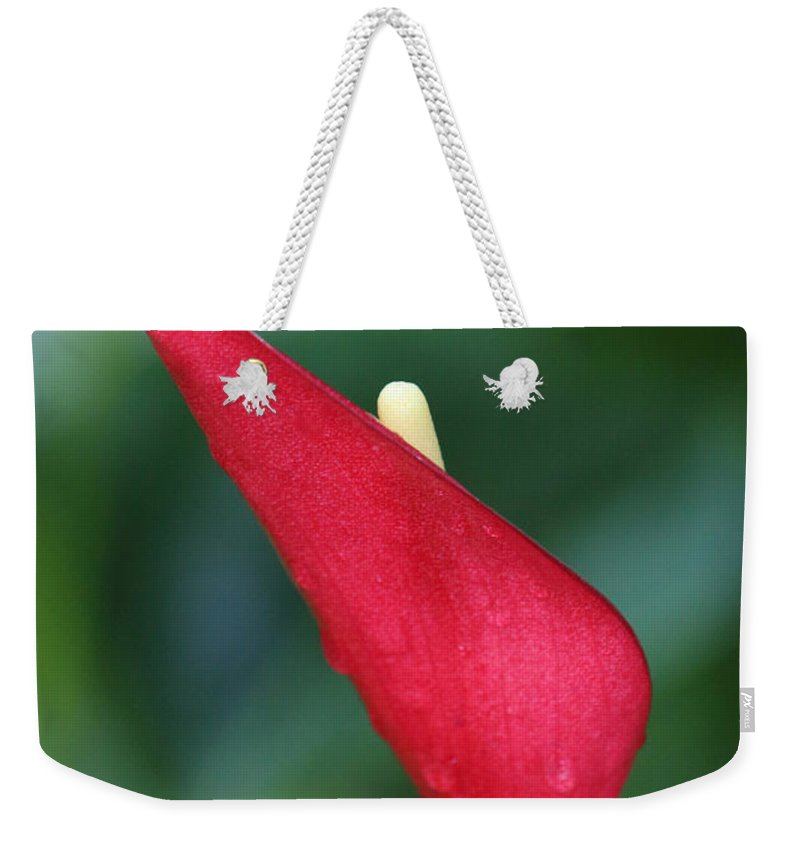 Photography Weekender Tote Bag featuring the photograph Just A Peek by Jackie Farnsworth