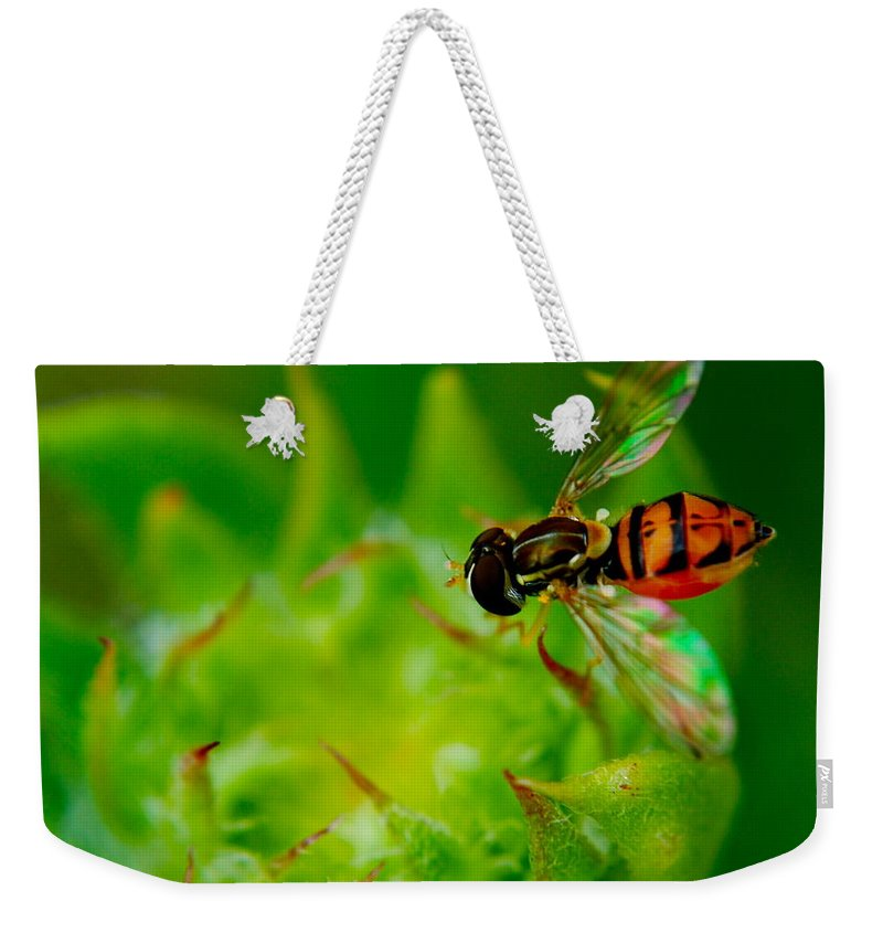 Bee Weekender Tote Bag featuring the photograph Just Beecause by Frozen in Time Fine Art Photography