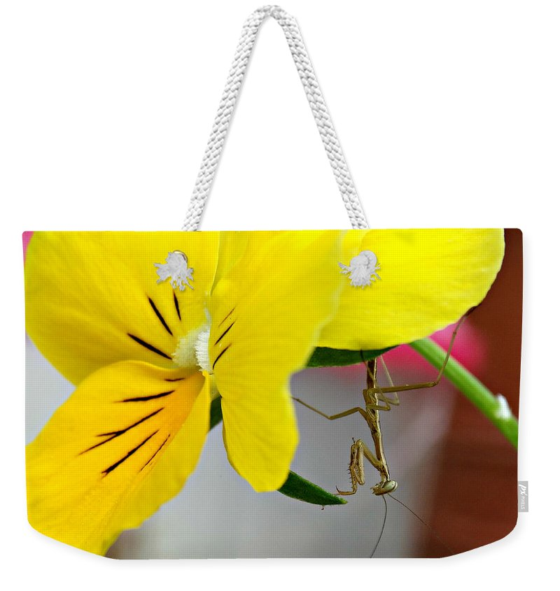 Just Hangin' Around Weekender Tote Bag featuring the photograph Just Hangin' Around by Brenda Conrad