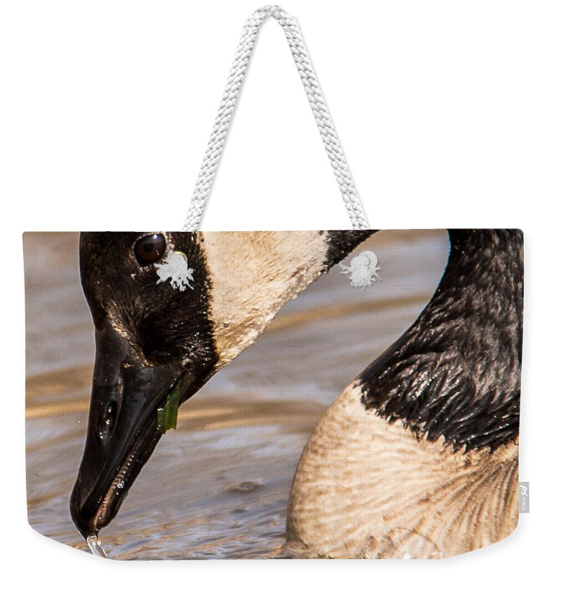 Wildlife Weekender Tote Bag featuring the photograph Just Hanging Around by Edward Peterson