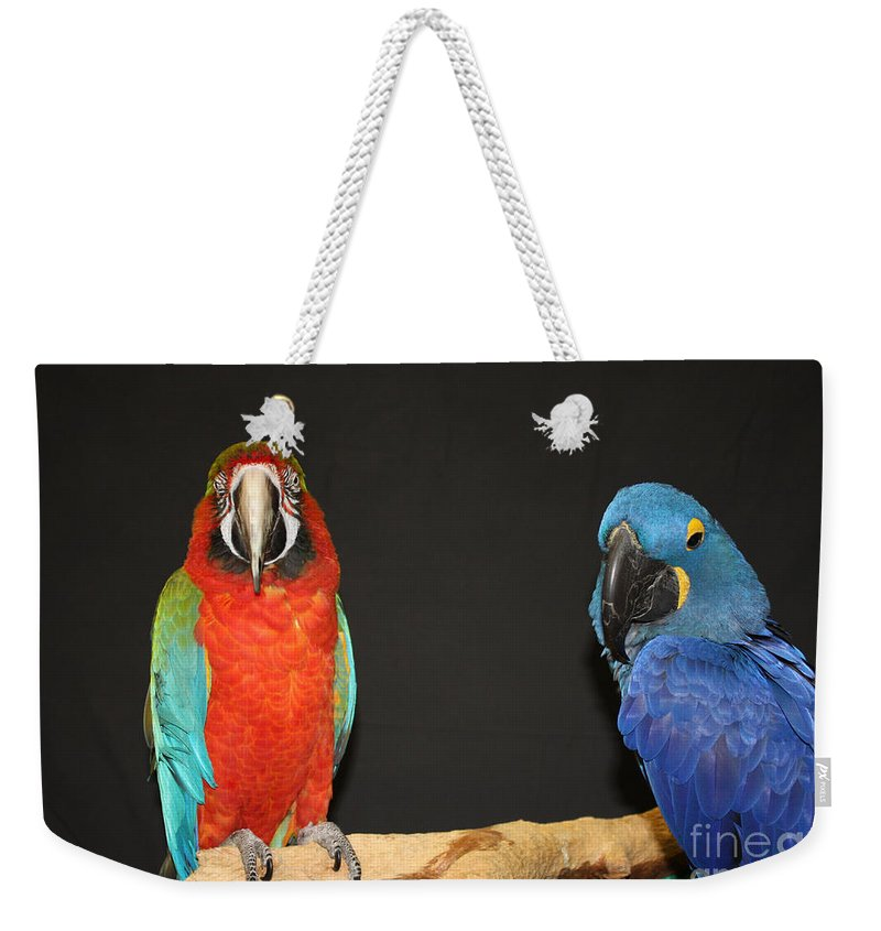 Just Hanging Out Weekender Tote Bag featuring the photograph Just Hanging Out by John Telfer
