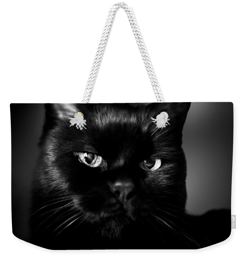 Cat Weekender Tote Bag featuring the photograph Just Thinking by Bob Orsillo
