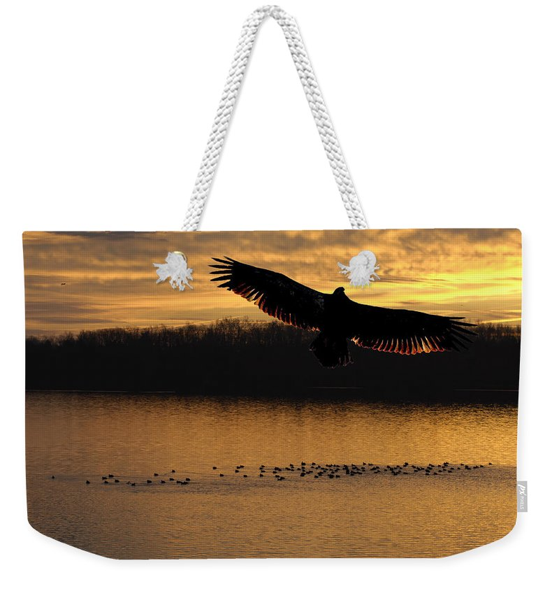 Juvenile Weekender Tote Bag featuring the photograph Juvenile Eagle Golden Sunset by Randall Branham