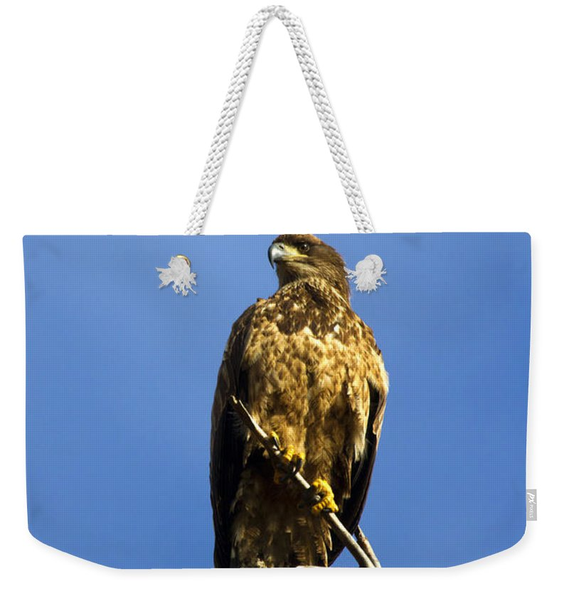 Bald Eagle Weekender Tote Bag featuring the photograph Juvenile Perch by Mike Dawson