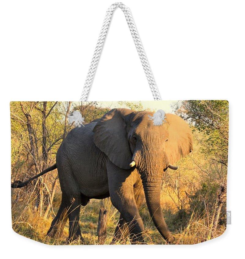 Elephants Weekender Tote Bag featuring the photograph Kalahari Elephant by Amanda Stadther