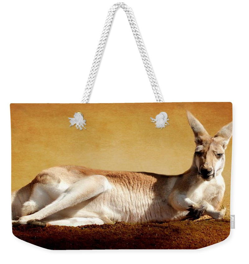 Kangaroo Weekender Tote Bag featuring the photograph Kangaroo by Heike Hultsch