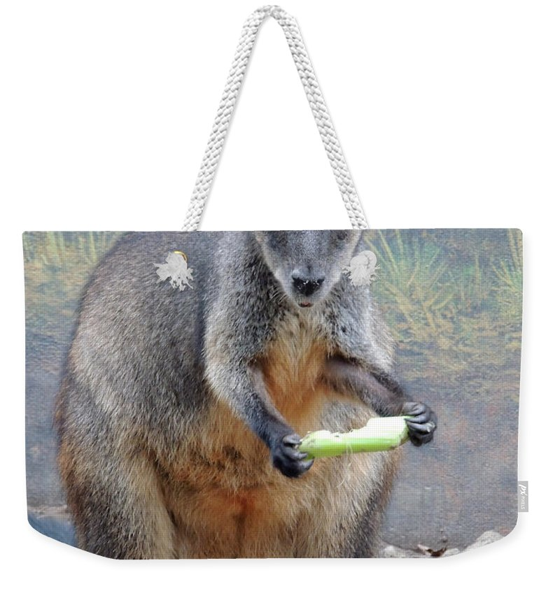 Kangaroo Weekender Tote Bag featuring the photograph kangaroo Snack by Munir Alawi
