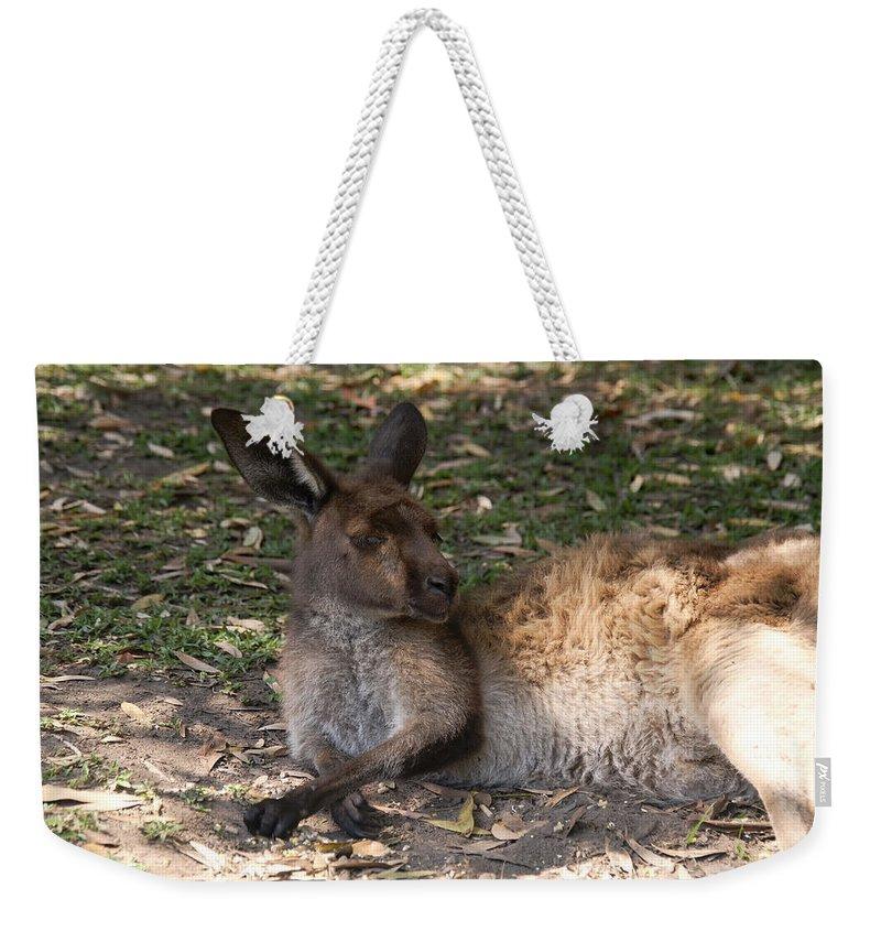 Australia Queensland Qld Weekender Tote Bag featuring the digital art Kangaroos by Carol Ailles