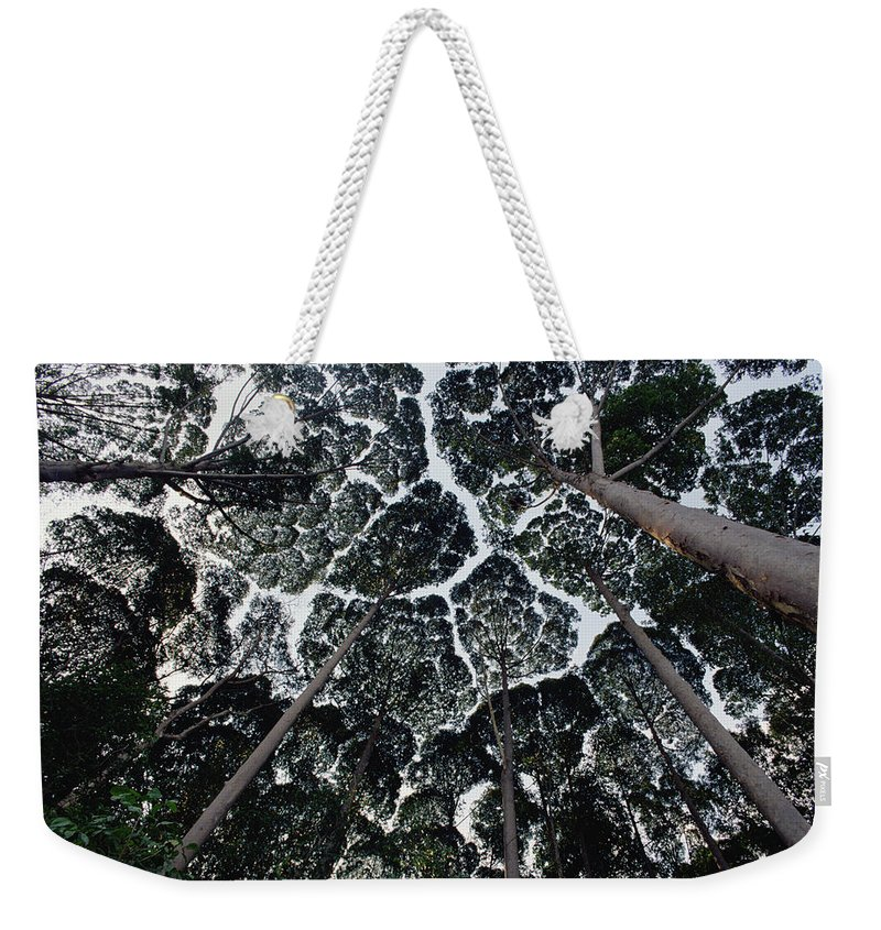 Feb0514 Weekender Tote Bag featuring the photograph Kapur Trees Showing Crown Shyness by Mark Moffett
