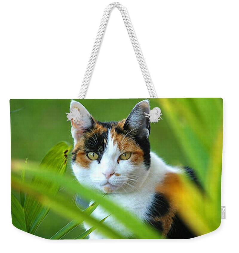Calico Cat Weekender Tote Bag featuring the photograph Kayla The Kalico by Rich Franco
