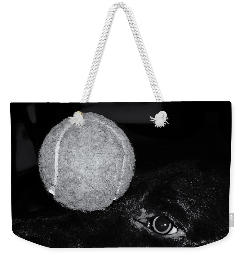 Dog Weekender Tote Bag featuring the photograph Keep Your Eye On The Ball by Roger Wedegis
